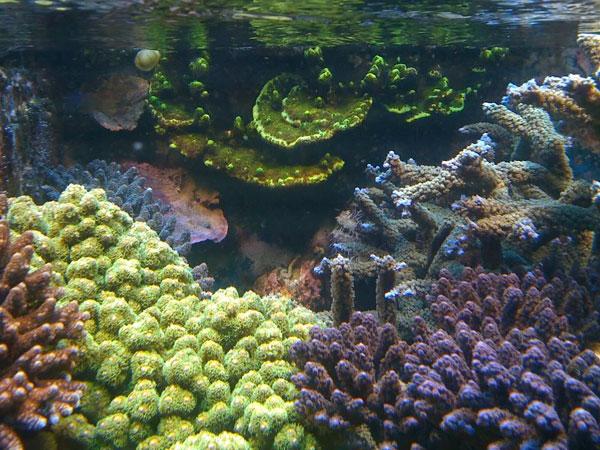 Miracle Mud Ecosystem Aquarium